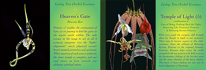 Living Tree Orchid Essences - Cards Set 2